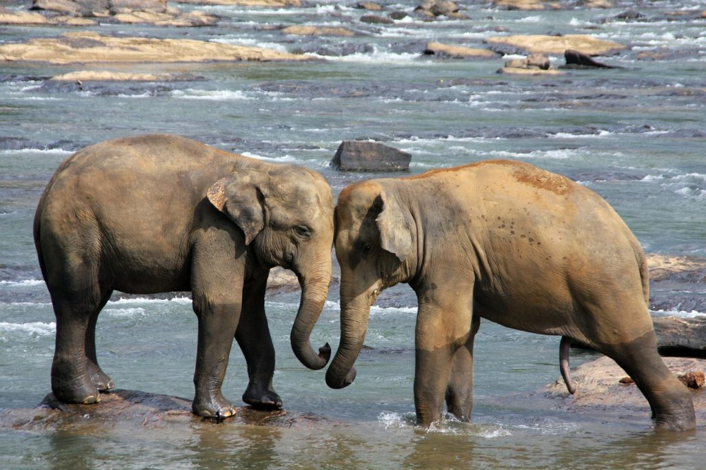 elephant-471480_1280-1