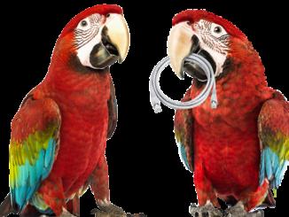 5_5-papousci-samostatne